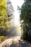 De stralen van de ochtendzon verlichten het bos en de weg royalty-vrije stock afbeelding