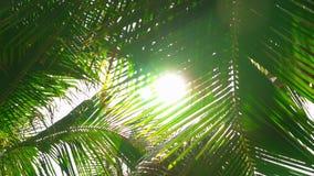 De stralen van de panoramazon in bladeren stock videobeelden