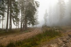 De stralen van de zon breken door de mist stock foto's