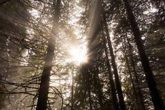 De stralen van de zon door de bomen Stock Afbeelding