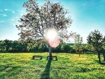 De stralen van de zon doordringen door de okkernootboom hieronder zijn twee banken stock afbeelding