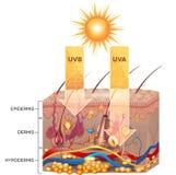 De straling van UVB en UVA- Stock Afbeeldingen