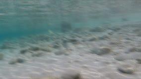 De strandcamera komt uit het water stock videobeelden