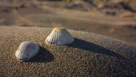 De strandemoties Royalty-vrije Stock Fotografie