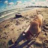 De Stranden van Cleveland Ohio stock afbeeldingen