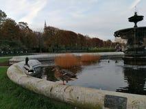 De Straten van Wenen Stock Fotografie