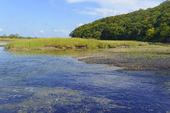 De streek van de estuariumovergang waar het zoet water zout water ontmoet Stock Afbeelding
