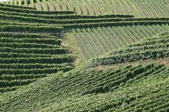 De strepen van wijngaarden Stock Afbeelding