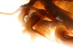 Octopusstrijd royalty-vrije stock foto's