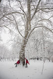 De strijd van de sneeuwbal Royalty-vrije Stock Afbeeldingen