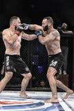 De strijd van Mmavechters bij de ring Stock Fotografie