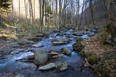 De stromen van de bergrivier door het bos in de lente stock foto's