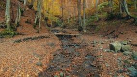De stromen van de bergrivier onder bruine houten brug in bos stock footage