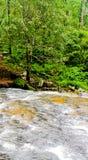 De stromen van de Narmadarivier door bos tijdens Moesson stock foto's