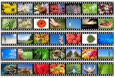 De strook van de film met verschillende foto's - het leven en aard Stock Afbeelding
