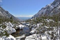 De stroom in bergen tussen schrobt pijnbomen in sneeuwland Stock Fotografie