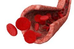 De stroom en de cellen van het bloed vector illustratie