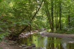 De stroom en het bos van het Elzbachwater dichtbij Eltz-Kasteel, Duitsland Stock Afbeelding