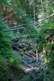 De stroom langs de bodem van een ravijn in het bos stromen en de bomen die zijn in het gevallen royalty-vrije stock foto