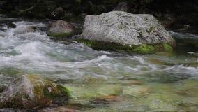 De Stroom van de bergrivier in het Bos stock videobeelden