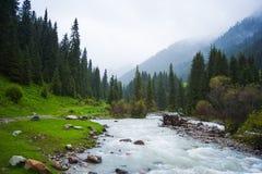 De stroom van de bergrivier, waterval in de bergen, bergkreek onder pijnbomen en groen De dalingen van de cascade over bemoste ro Royalty-vrije Stock Foto