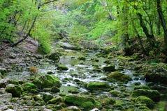 De stroom van de berg crimea Stock Foto