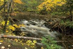 De stroom van de herfst Stock Foto