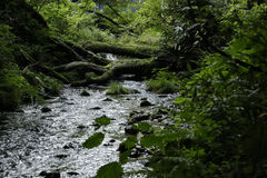 De stroom van de Kitanizawaberg Royalty-vrije Stock Foto