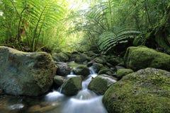 De stroom van de Manoadaling in het weelderige tropische regenwoud Stock Afbeeldingen
