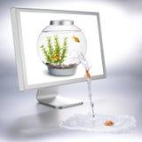 De stroom van Fishbowl stock afbeelding