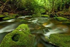 De Stroom van het regenwoud Royalty-vrije Stock Foto