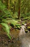 De stroom van het regenwoud Stock Fotografie