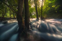 De Stroom van het rivierwater tussen Forest Trees Royalty-vrije Stock Afbeelding