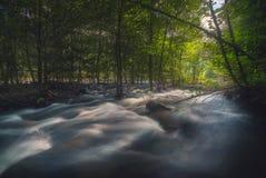 De Stroom van het rivierwater tussen Forest Trees Stock Foto