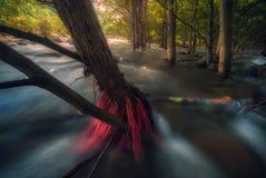 De Stroom van het rivierwater tussen Forest Trees en wortels Stock Afbeeldingen