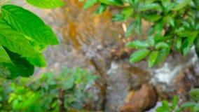 De stroom van water in het zonnige bos stock video