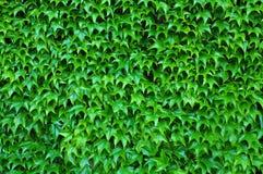 De structuur van de floratextuur Stock Afbeeldingen