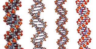 De structuur van DNA Stock Afbeeldingen