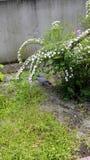 De struik en de vogel Royalty-vrije Stock Fotografie