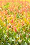 De struik gaat rood en groen weg Royalty-vrije Stock Afbeelding