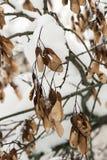 De struik heeft zijn zonnebloemzaden tot de lente gelaten stock foto