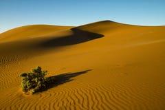 De struik van de woestijn Stock Foto's