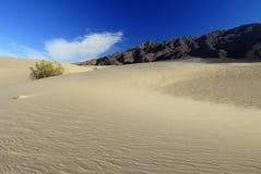 De struik van de woestijn op een zandduin Stock Afbeeldingen