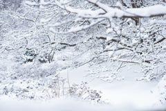 De struiken en de bomen worden behandeld door sneeuw royalty-vrije stock fotografie