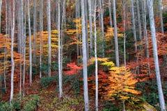 De struiken van de herfst royalty-vrije stock afbeeldingen