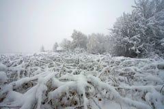 De struiken van de winter royalty-vrije stock afbeelding