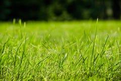 De struiken van groen gras is dicht royalty-vrije stock fotografie