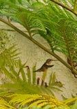 De struiken van het kolibrieprofiel stock afbeeldingen