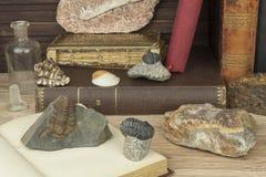 De studie van paleontologie bij de Universiteit Het voorbereidingen treffen voor een belangrijk examen stock fotografie