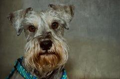 De studioportret van de hond stock foto's